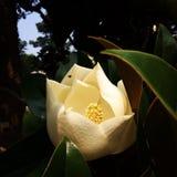Fleur de floraison photos libres de droits