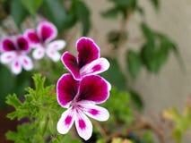 Fleur de floraison Photographie stock