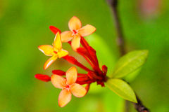 Fleur de floraison Photo libre de droits