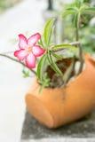Fleur de floraison d'évasion Photo libre de droits
