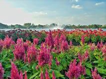Fleur de floraison devant l'eau de fontaine photographie stock