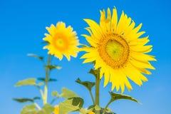 Parement du soleil Photo libre de droits