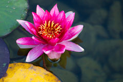 Fleur de flottement photos libres de droits