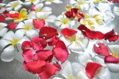 Fleur de flottement de Frangipani Photographie stock libre de droits