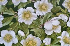 Fleur de fond Photographie stock