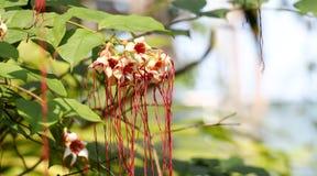 Fleur de fond et lumière 59 du soleil Photo libre de droits