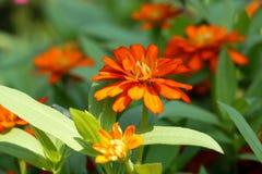 Fleur de fond et lumière oranges 49 du soleil Photos stock