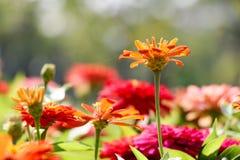 Fleur de fond et lumière oranges 58 du soleil Photos stock