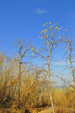 Fleur de forêt sèche Image libre de droits