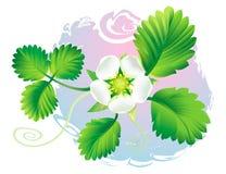 Fleur de fraise illustration stock