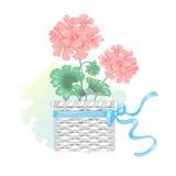 Fleur de géranium dans un panier en osier avec un arc illustration libre de droits
