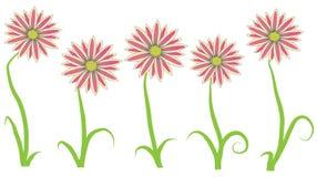 Fleur de Gazania Photographie stock libre de droits