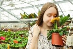 Fleur de gerbera de reniflement de fille en serre chaude photographie stock