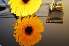 Fleur de Gerbera sur les ficelles d'une guitare Image stock