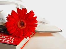 Fleur de Gerbera sur les livres Photos libres de droits