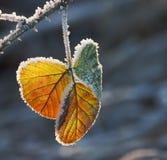 Fleur de glace Photographie stock libre de droits