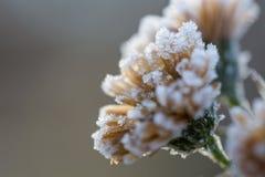 Fleur de glace Photos stock