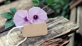 Fleur de gloire de matin, vieux fond en bois photographie stock
