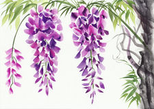 Fleur de glycine Image stock