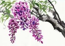 Fleur de glycine Image libre de droits