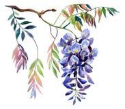 Fleur de glycine Carte de glycine d'aquarelle Image libre de droits