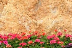 Fleur de géranium Photographie stock libre de droits