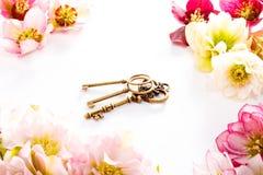 Fleur de Hellebore ou orientalis de Helleborus et clé antiqued d'isolement sur le blanc images libres de droits