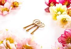 Fleur de Hellebore ou orientalis de Helleborus et clé antiqued d'isolement sur le blanc image stock