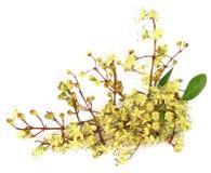 Fleur de henné d'Ayurvedic images libres de droits