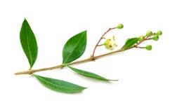 Fleur de henné d'Ayurvedic photographie stock libre de droits