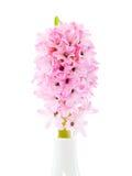 Fleur de jacinthe dans un vase Images libres de droits