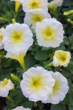 Fleur de jardin photos stock