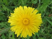Fleur de jardin Photos libres de droits