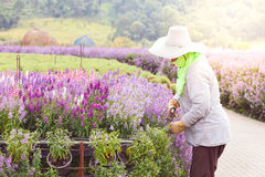 Fleur de jardinier Photos stock