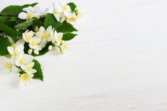 Fleur de jasmin sur la table en bois Carte de voeux Photographie stock