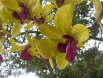 Fleur de jaune Image stock