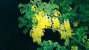 Fleur de jaune d'arbre d'usine Photos libres de droits