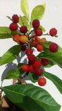 Fleur de jaune orange avec la feuille rouge verte Images stock