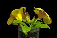 Fleur de jaunes sur la glace photos stock