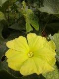 Fleur de Jinga d'image Images libres de droits