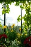 Fleur de jonquille Photos libres de droits