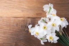 Fleur de jonquille sur le fond Photographie stock libre de droits