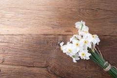Fleur de jonquille sur le fond Image libre de droits