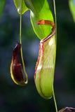 Fleur de jungles photographie stock
