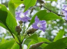 Fleur de Karvy photo stock