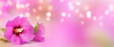 Fleur de ketmie pour le jour de mères photographie stock