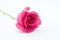 Fleur de l'amour Photos libres de droits