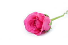 Fleur de l'amour Photographie stock