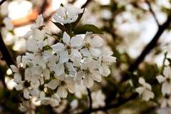 Fleur de l'arbre Photographie stock