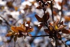 Fleur de l'arbre Photo libre de droits
